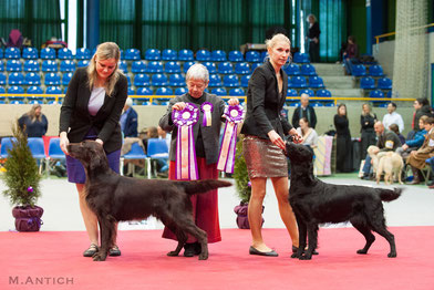 """Mitch"" BEST OF BREED - over 80 FCR's entered!!"