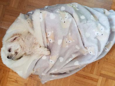 Schlafsack für Hunde, Kuschelsack für Hunde, Hundebett