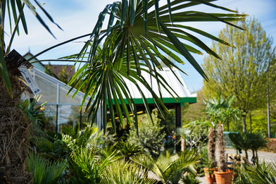 Hanse Palmen Außenanlage