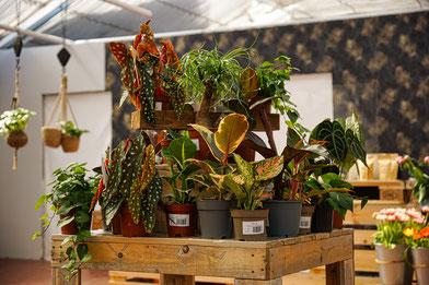 Auswahl an Zimmerpflanzen