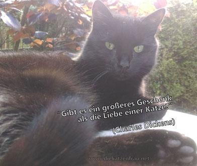 Mobile Katzenbetreuung Saarland - Die Katzenfrau