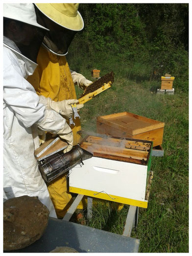 La Laura i en Sergi apicultors de Dolça Abella