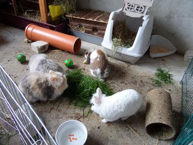 So könnte Ihre Kaninchenhaltung aussehen.