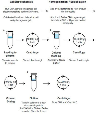 DNA Purification Gel and PCR-products