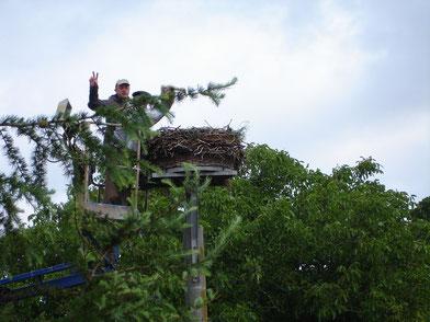 Beringung derJungvögel