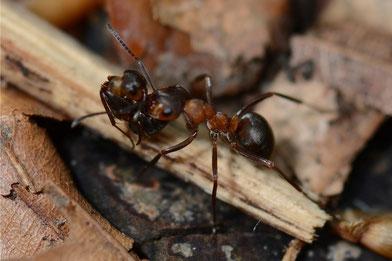 Ameisenkinderfahrdienst