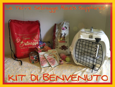cuccioli disponibili, gatti siberiani, cuccioli, siberiani, feld1, ipoalleregenico, gattini, neva masquerade, nem, allergia, gatto siberiano, allevamento,