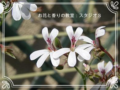 お花と香りの教室:スタジオS