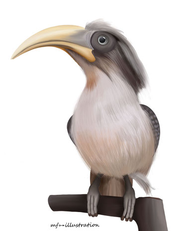 Sri Lanka grey hornbill (Ocyceros gingalensis)