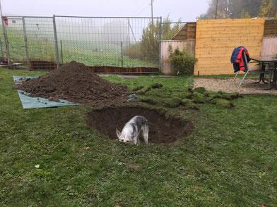 Herrchen hat gesagt, das Loch müsse so tief sein, dass man mich darinnen nicht mehr sieht. Hm, passt aber noch nicht...