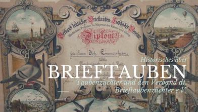 Brieftaube, Geschichte Brieftaubenwesen, Historie Brieftauben, geschichtliches zu Brieftauben