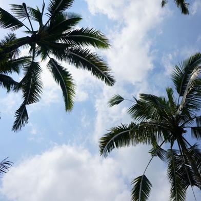 CO2 Fussabdruck auf Reisen reduzieren