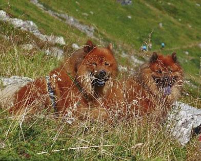 Papa AVITO  &  Sohn ARI vom Bärenschlössle