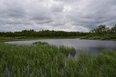 Typisches Hechtgewässer