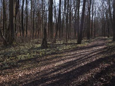 Seeholz, März 2020. Foto: Maiken Winter