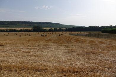 La Fête de la moisson du Sud de l'Aisne se déroulera à l'arrière du Château de Condé.