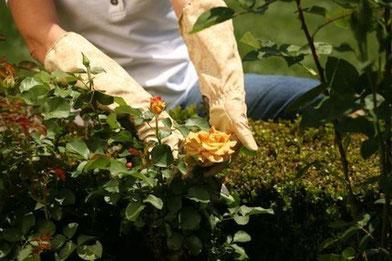 Работы по уходу за цветниками.