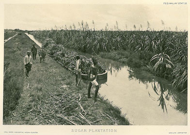 Ansicht einer Zuckerplantage, Bild: Historical postcard of Indonesia [Public domain].
