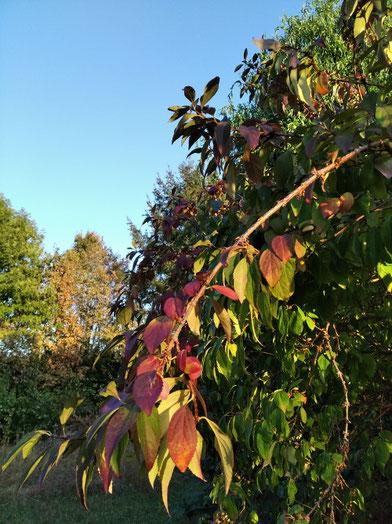 Gelassen durch den Herbst