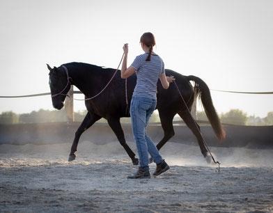 Blindly Follow Horses