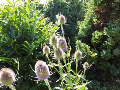 den Bienen helfen, bienenfreundliche Gärten, Harzer Gebirgsimkerei