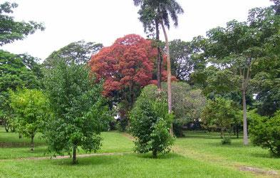 Limbé, le jardin botanique