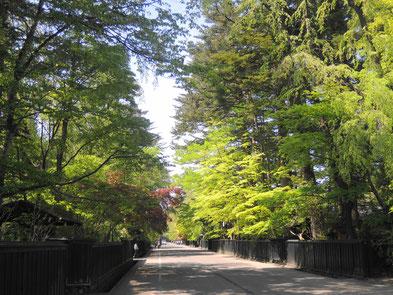 武家屋敷の新緑も素晴らしい!シダレザクラではなくシダレミドリがGOOD!