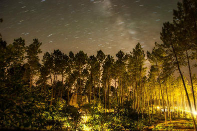 nuit étoilée de la forêt en cabanes en ouverture longue