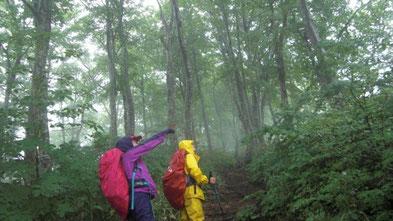 ブナ林を歩く