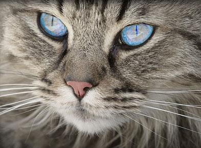 Wissenswertes über Katzen