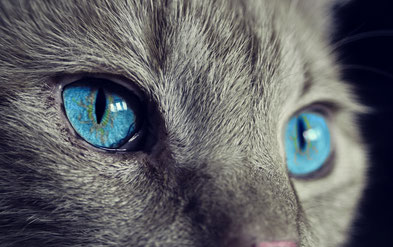 Die Katzenanatomie