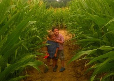 labyrinthe - La cueillette de cappy - Cappy - Somme - Picardie - Vallée de la Somme - Pays du Coquelicot- fruits et legumes de saison - producteur