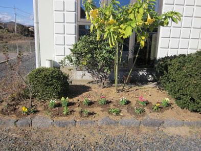 事務所前の花壇にお花を植えました☆