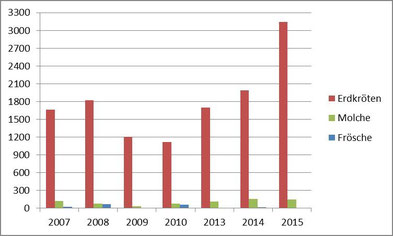 Krötenwanderung Cleeberg Oberkleen Grafik