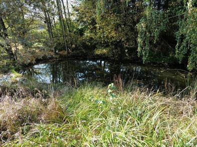 Ein Teich mit Hochstauden ist ein artenreicher Lebensraum