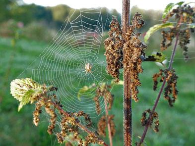 Faszination Spinne und Brennnessel im Herbst