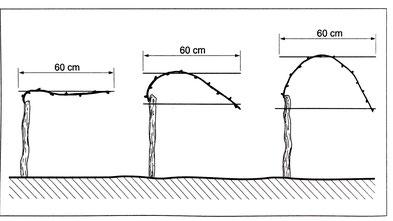 Abbildung 1: Spaliererziehungsformen: a) Flachbogen, b) Halbbogen, c) Pendelbogen. Quelle: Der Winzer, Müller et. al. (2008)