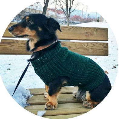 Der Bonnietastische Hundepulli Toowooltobecools Webseite