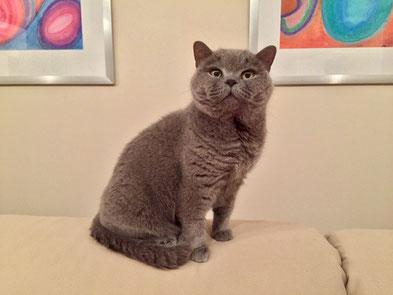Bild: Katze Helena posiert auf dem Sofa