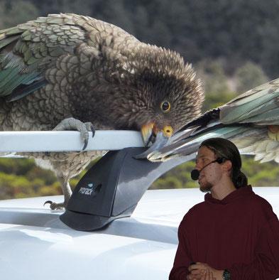 Auf der Reise durch den Fiordland-National Park trifft man auf einige komische Vögel...