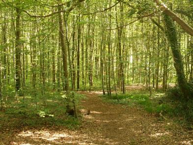 bienfait de la forêt