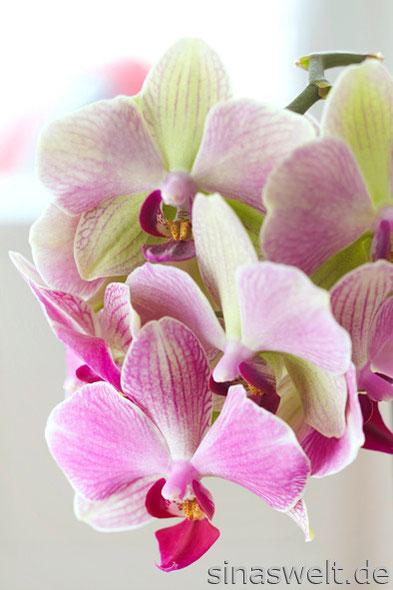 orchideen pflege richtig d ngen schneiden gie en blog sina s welt kreativ nachhaltig. Black Bedroom Furniture Sets. Home Design Ideas