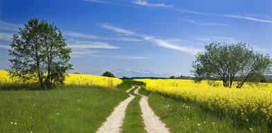 Symbolbild mit einem Feldweg
