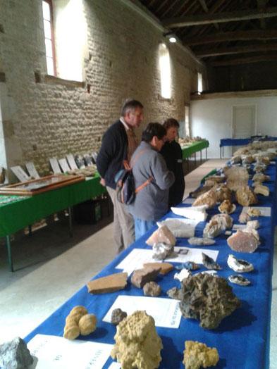 Exhibition of fossils and minerals - Chateau Saveilles - Saveille - Group Castle Tour - Family Castle Tour - Renaissance Castle