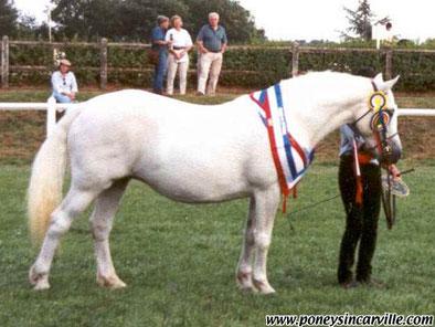 Equinoxe Melody, grande gagnante en concours d'élevage