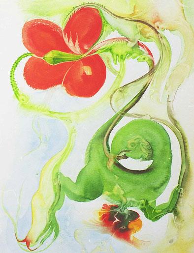 Papaver, 1996, aquarelle sur carton, 19 x 26 cm