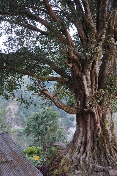 Baum, Wachstum, humanistische Psychotherapie