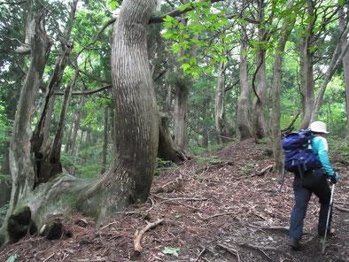 コヤマノ岳に向かって