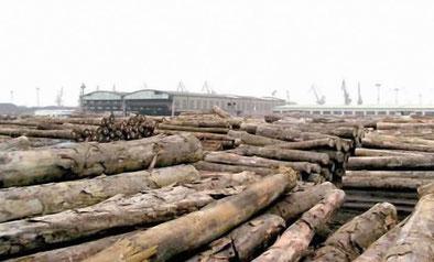 Billes de bois au parc a bois du port de Douala