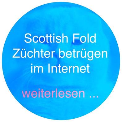 Scottish Fold Züchter betrügen im Internet